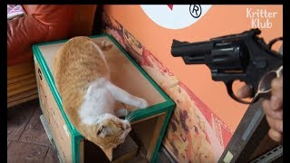 Cat Shows Gratitude To His Owner By Playing Acting Game | Kritter Klub