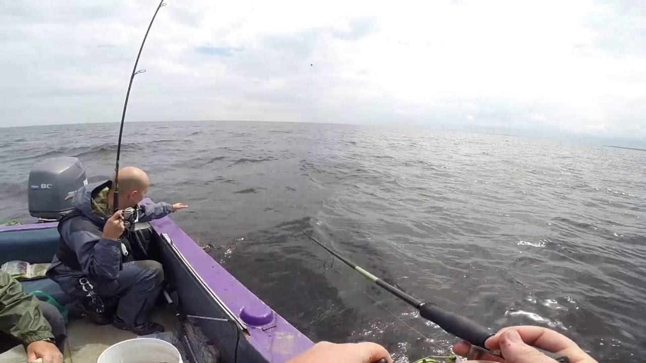 прогноз клева берша в рыбинске