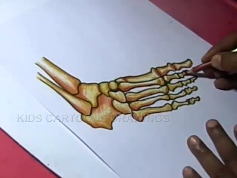 How To Draw Foot And Ankle Bone Anatomy Drawing Youtube