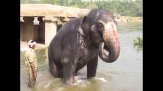 Купание слона :))) Индия, Хампи, потрясающее место!