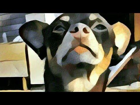 фото 10 собак