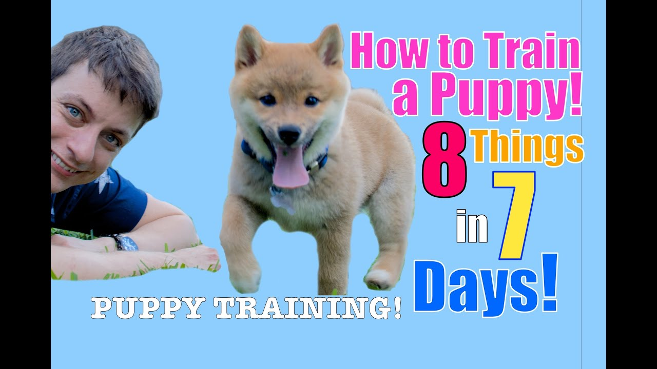 How to Train Your Puppy 8 Things in 7 Days! (STOP Puppy ...