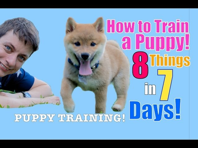 How to Train Your Puppy 8 Things in 7 Days! (STOP Puppy Biting, Come, Stay... )