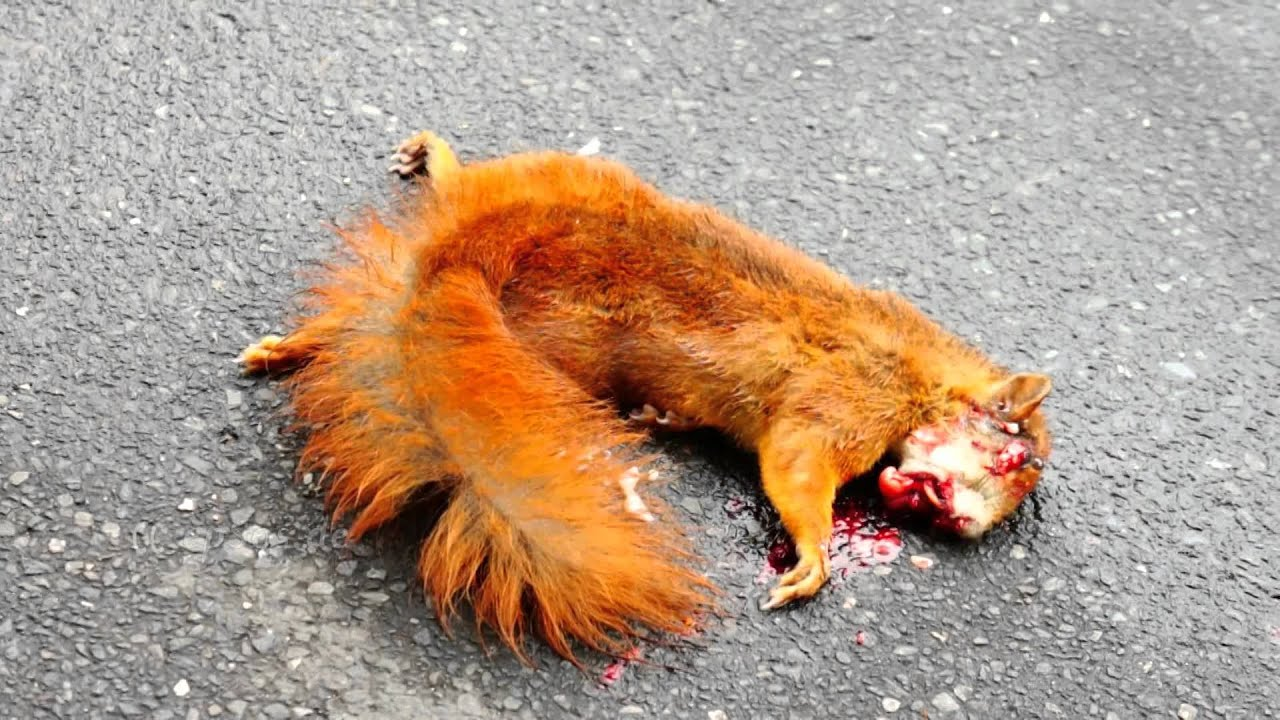 Sad Squirrel Funeral In Memory Of Jumpy Pet Youtube