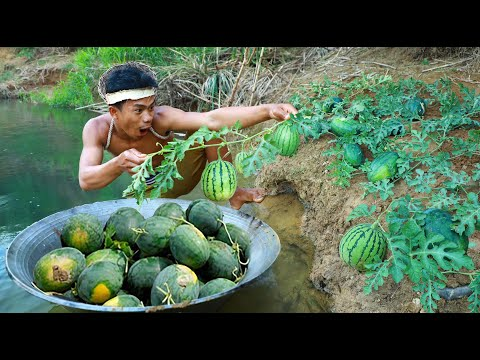 survival in the rainforest - Find fish meet watermelons Near the River