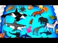 Learn Wild Sea Animal Names and Zoo Animals Names Education Video Toys For Kids