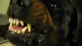 Rottweiler, Shepherd & Guardian