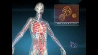 Beta Glucan and the Immune System