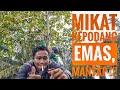 Pikat Kepodang Emas Gacor Panggil Musuh Terus Seru Bor  Mp3 - Mp4 Download