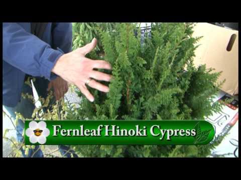 French Prairie Perennials - GardenPalooza - YouTube
