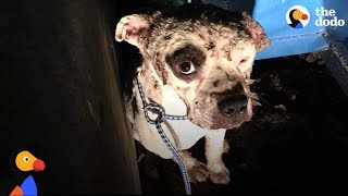Sad Dog COVERED in Fight Wounds Smiles for the First Time | The Dodo