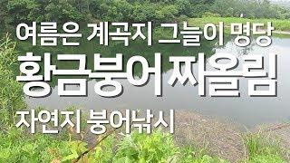 느티나무 그늘아래 황금 토종 붕어 찌올림 붕어낚시 l 물가에선나무 붕어 낚시 동영상 방송