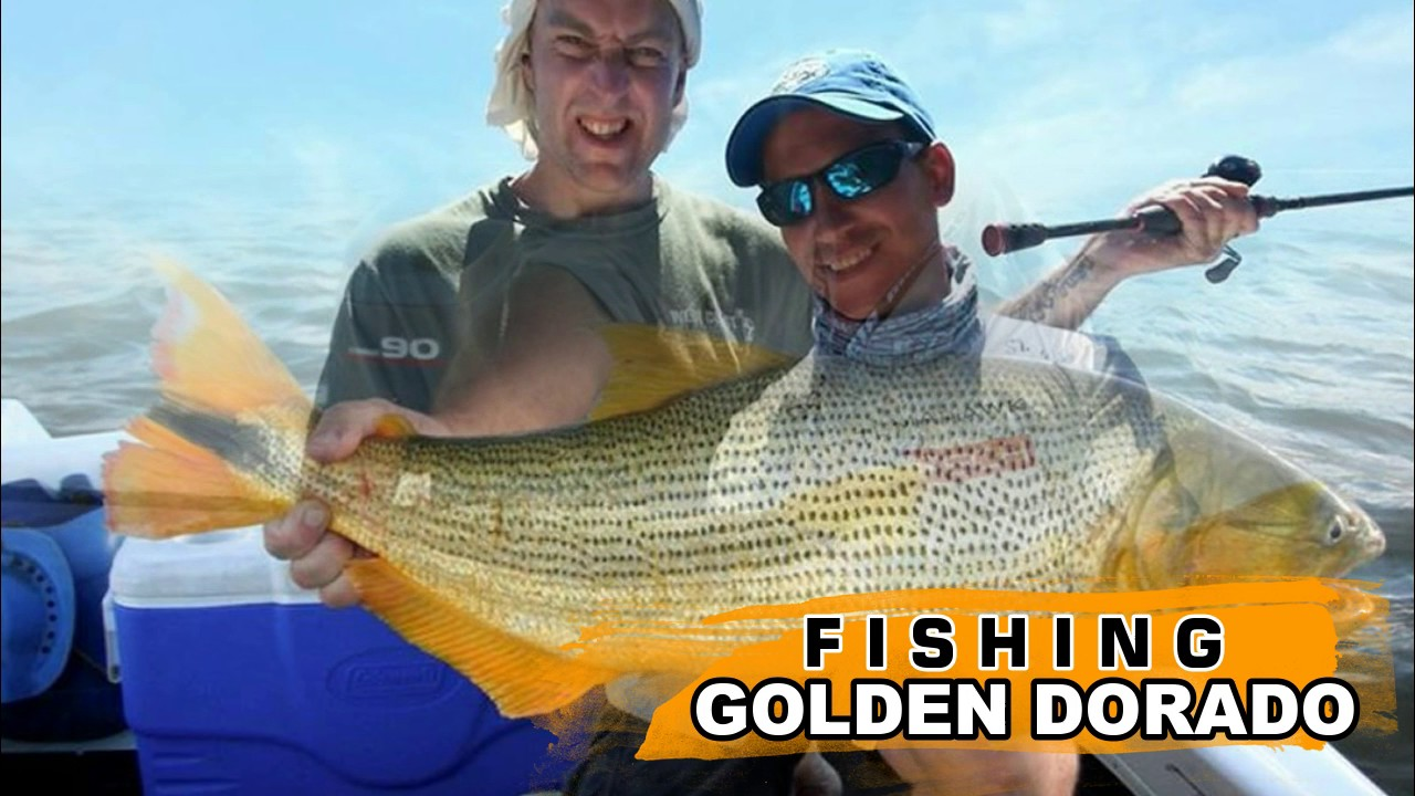 Fishing golden dorado argentina trip to famous parana for Fishing in argentina