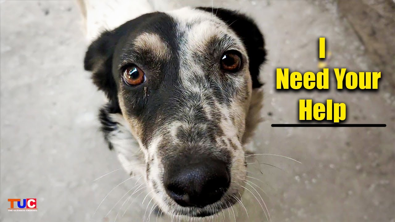Your One Help! Can Save Street Dogs of INDIA | TUC