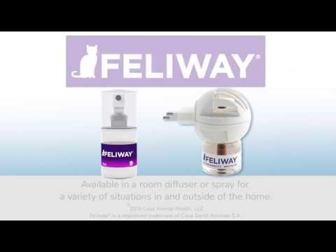 Feliway: How pheromones work for cats