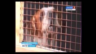 Репортаж ко дню бездомных животных вести иваново