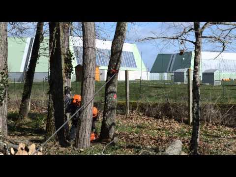 Cric abattage forestier pour diriger la chute d 39 un arbre - Tire fort forestier ...
