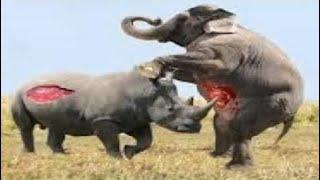 [Best Animal Fights]  [Wild Animal Attack]  Most Amazing Wild Animal Attacks - Animal Attack Human