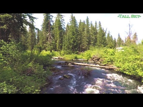 Virtual Hike: Deep Forest/Lake/Streams/Bridges - Classical Music 53 Min (#2C)