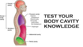 TEST YOUR BODY CAVITY KNOWLEDGE