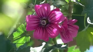 CA Native Plant Garden Tour