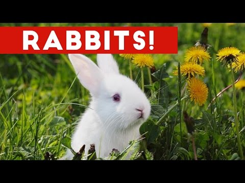 Funny Rabbit Videos Weekly Compilation 2017 | Funny Pet Videos