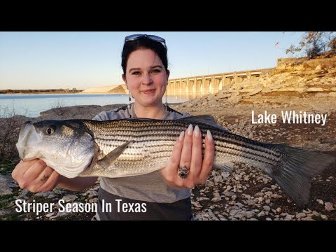 How To Catch Striped Bass & Scouting Out Fishing Lake Whitney