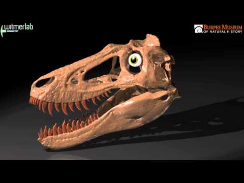 Jane the tyrannosaur - from a pile of bones to an active predator
