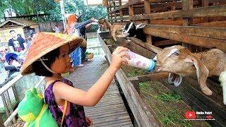 Naila Nangis Dipatok Ayam, TAPI SERU kasih makan dan susu hewan di KUNTUM FARMFIELD bogor