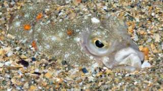 Natural England - The Lune Deep, Morecambe Bay