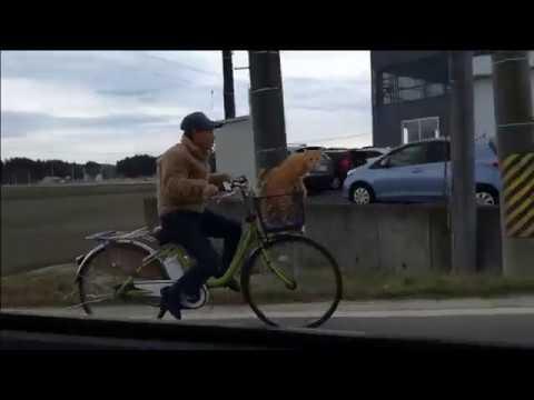 Bike cat in Fukushima