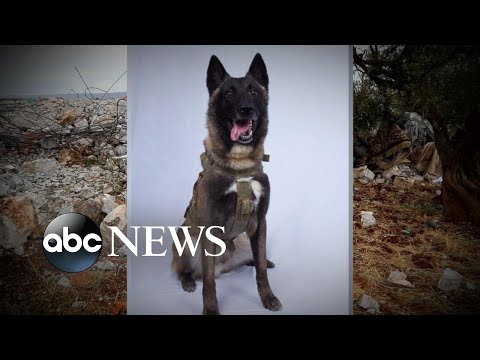 Hero dog who helped take down ISIS leader from elite K-9 group l ABC News