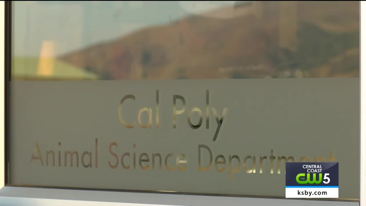 protesters-of-cal-poly-s-meat-processing-center-chain-themselves-to-cow-chute