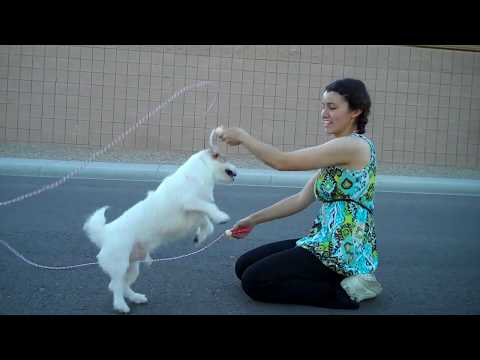 Jesse can Double Dutch Better than most People! Amazing Dog Trick~