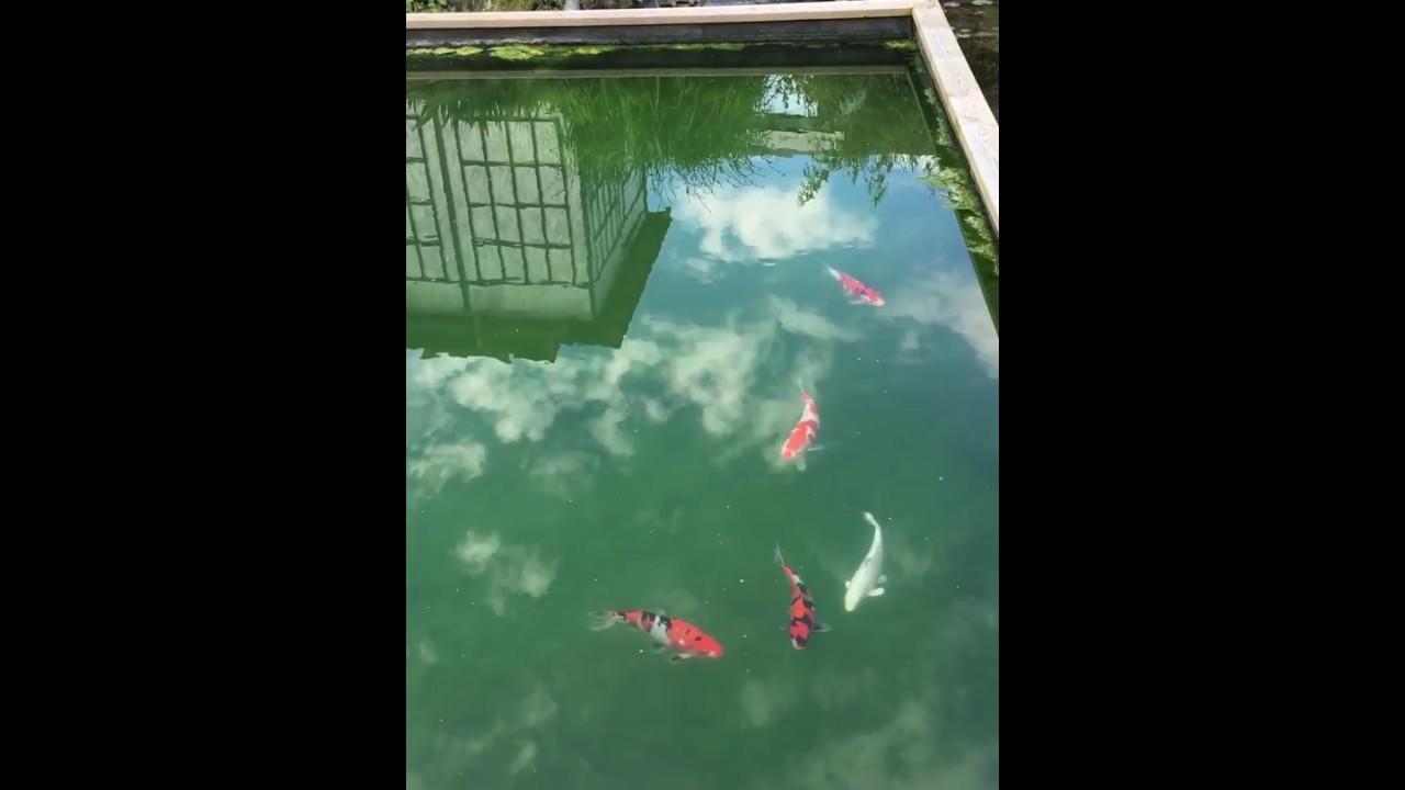 Bassin japonais pierre bassin eau dans jardin japonais for Carpe koi truffaut