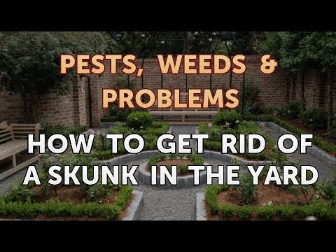 How to Get Rid of a Skunk in the Yard - YouTube