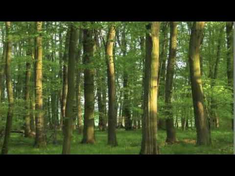 Au bois d'Aline de mick est tout seul