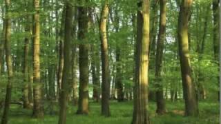 Au bois d