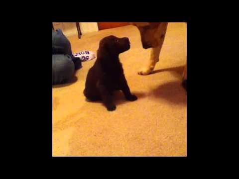 Dog meets Puppy for the first time