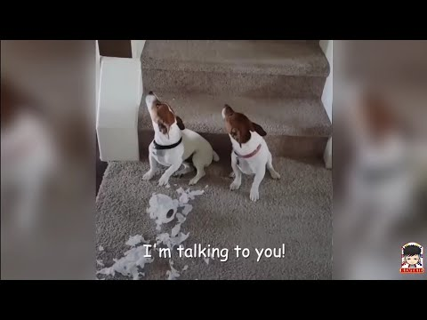 GUILTY DOGS COMPILATION CUTE MOMENTS 2019