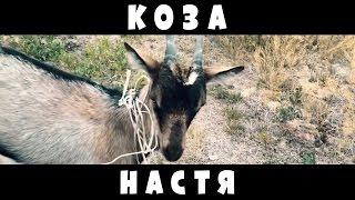 """Коза Настя"""