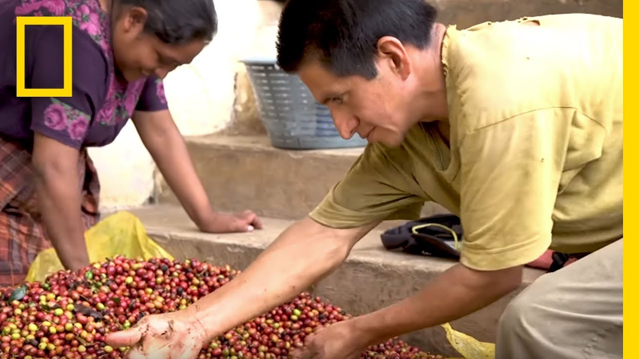 Coffee Farmers Hopeful For Their Dying Crops | Short Film Showcase