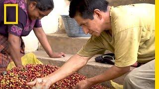 Coffee Farmers Hopeful For Their Dying Crops | Short Film Showcase