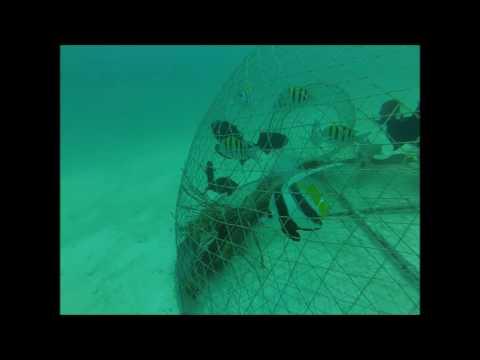 PADI Scuba Diver Course on Dibba Rock, UAE