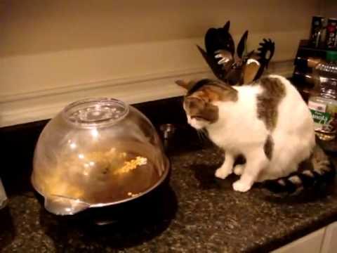 018. Кот и воздушная кукуруза