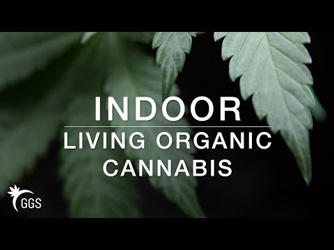 Growing Cannabis: No Till Living Organic Marijuana in Flower, Veg, and Seedling Phase