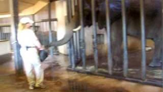 Elephant feeding at the Sedgwick County Zoo