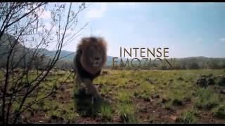 African Safari 3D - film-stream.org  in Italiano Completo