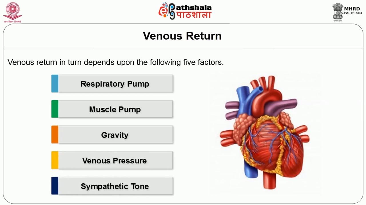 hight resolution of regulation of cardiac output