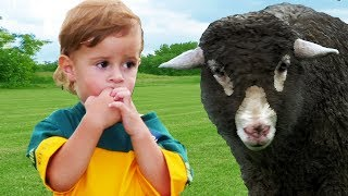 Baa Baa Black Sheep | +More Nursery Rhymes & Kids Songs - LETSGOMARTIN